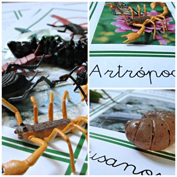 invertebrados.jpg