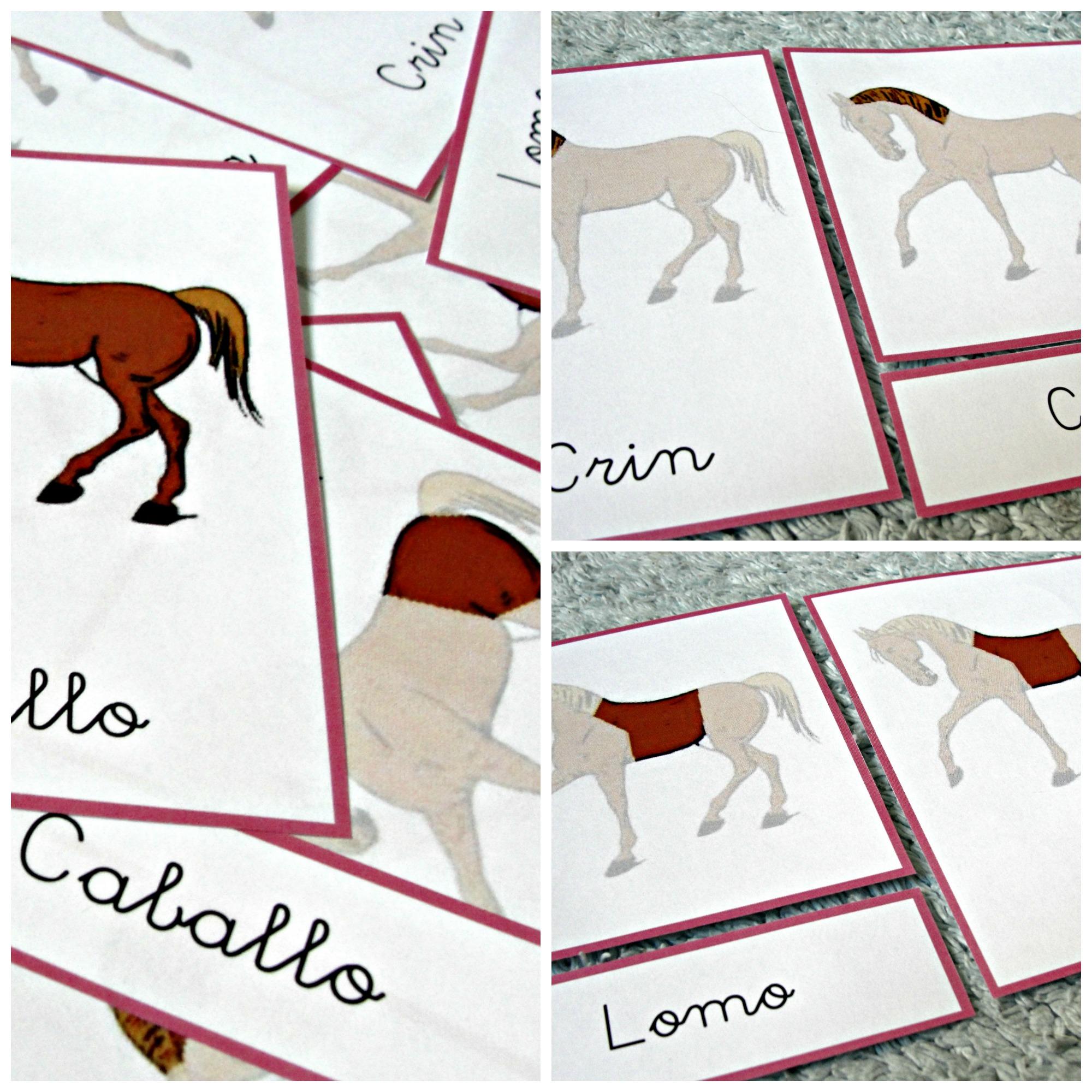 Fantástico Libro De Colorear De Anatomía Del Caballo Modelo ...
