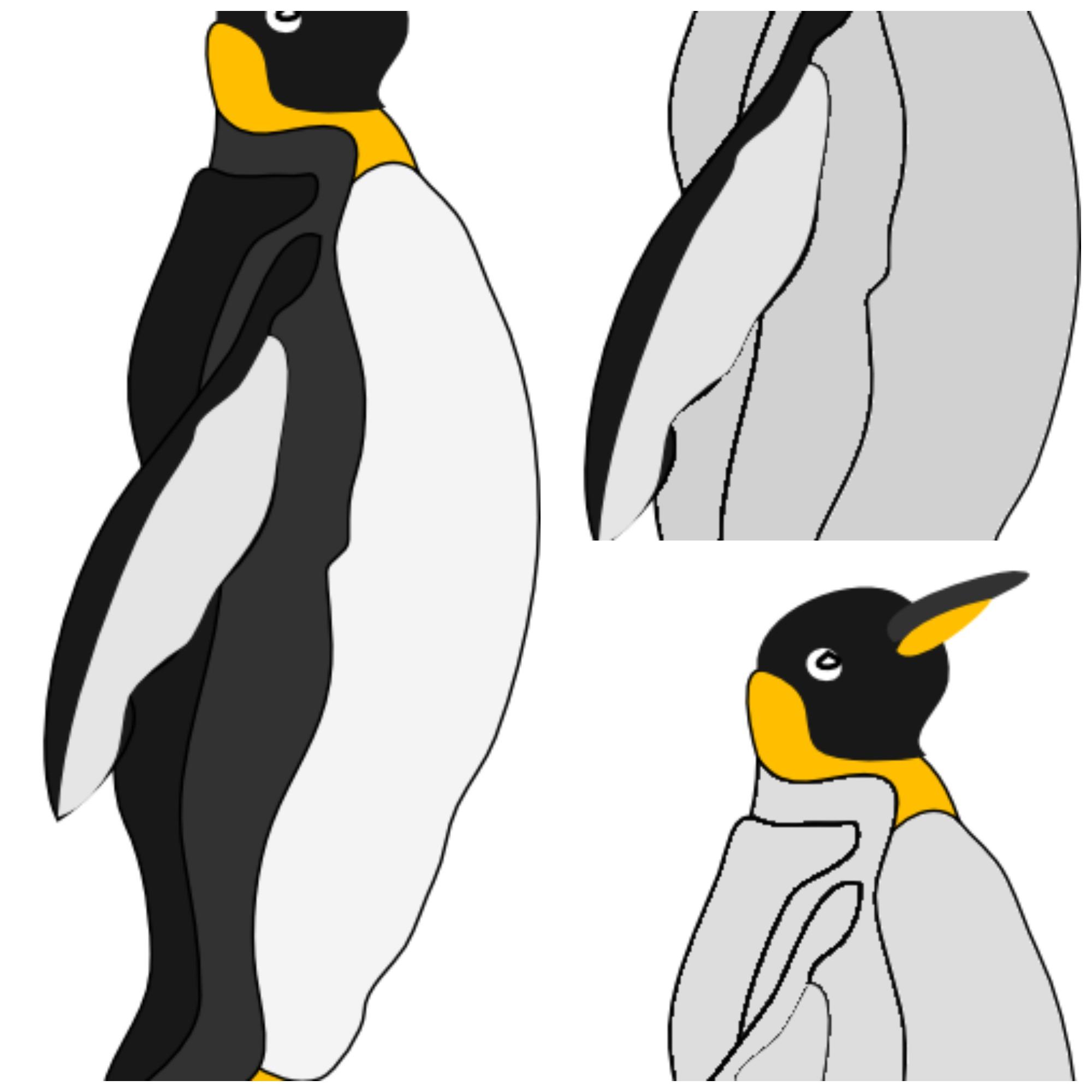 Anatomía del pingüíno – MiMontessori