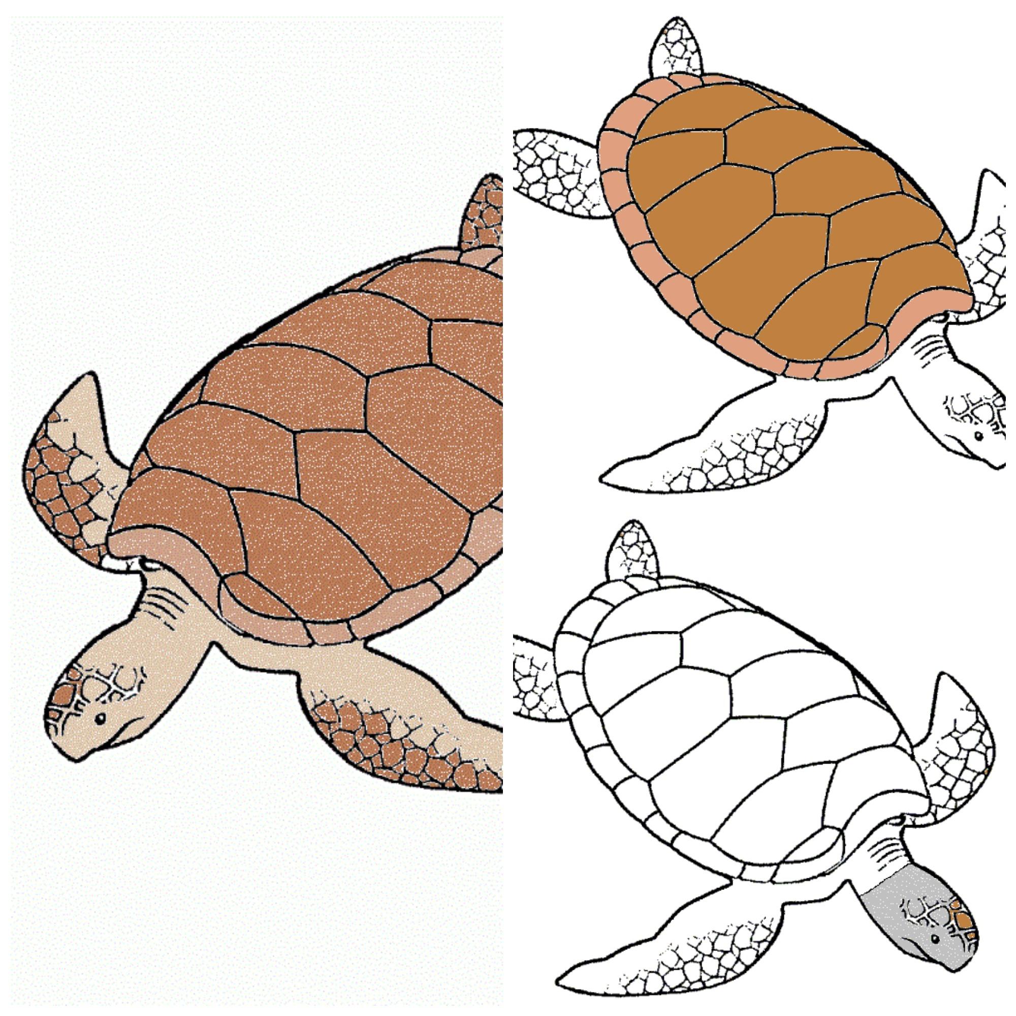 Anatomía de la tortuga – MiMontessori
