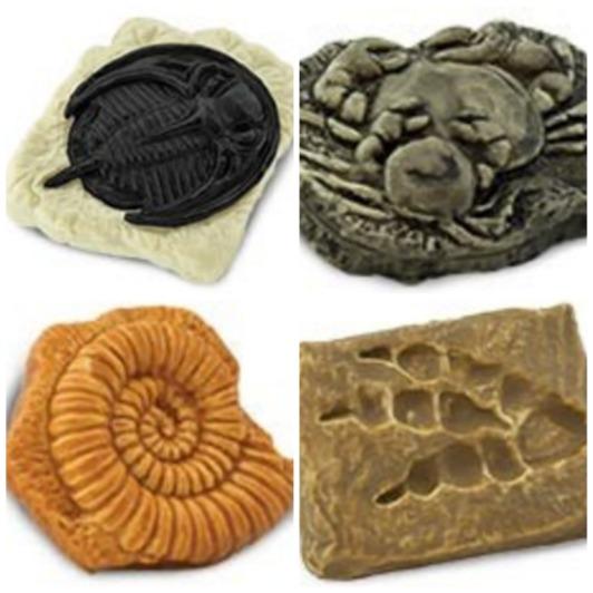 fosiles safari